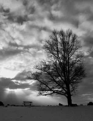 Zitten bij de boom