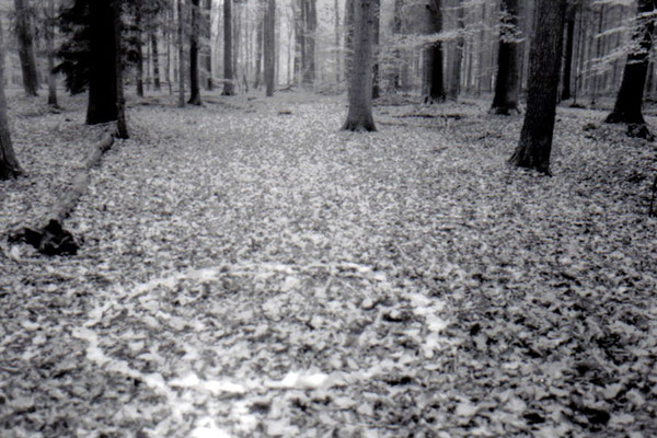 2003 - Haagse Bos (Enschede)