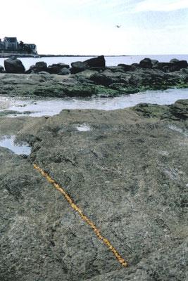 2001 - Yellow Line