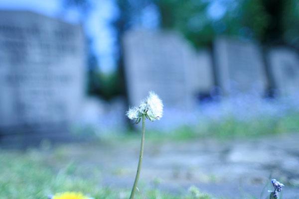 2008 - Ooster begraafplaats (Enschede)