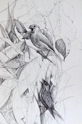 Lou Rat-Fischer Birds