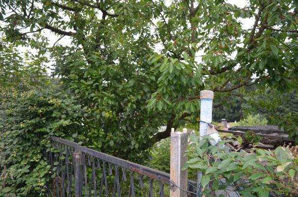 Baugrundstück, Grundstück, Solingen, Solingen Wald, Tor und Baum