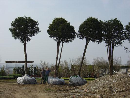 Wir arbeiten in Kloten, Bassersdorf, Bülach, Embrach, Oberembrach, Lufingen, Auwil, Winkel, Nürensdorf, Zürich, Höri, Hochfelden, Rümlang, Birchwil, Opfikon, Glattbrugg, Dübendorf, Wallisellen,