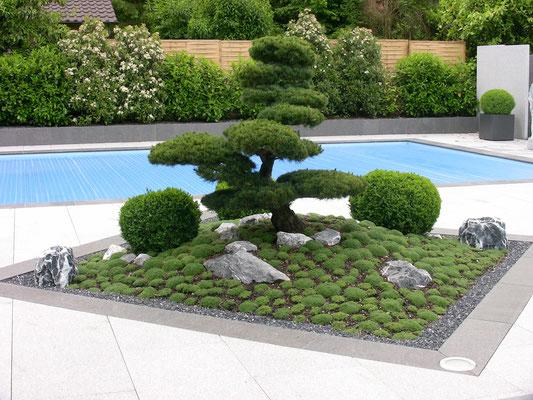 Bonsai, Thymian, Buxus, Eberhard_Gartenbau_AG, 8302 Kloten