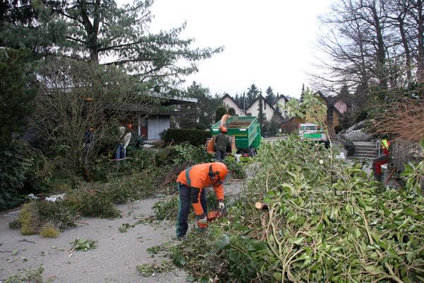 Aufräumarbeiten nach Sturmschäden Eberhard Gartenbau AG Kloten