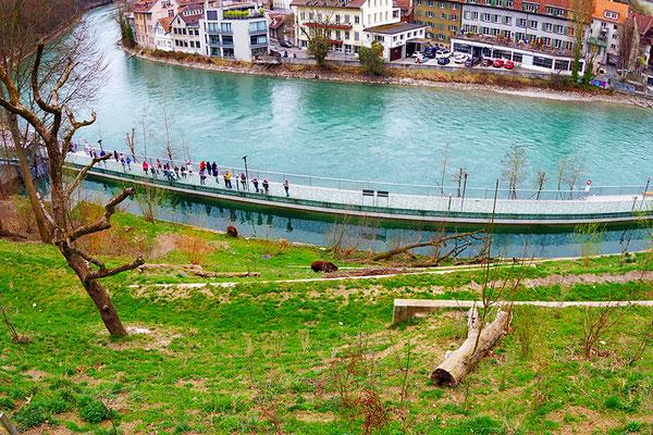 Bern のクマ園。くまを上から見下ろす