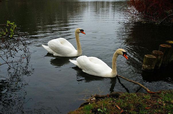 この日はまず Bad Waldsee の Schlosssee 付近を散歩。白鳥と遊ぶ。その後、Bauernschule へ