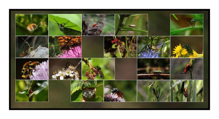 Insectuaire -Biodiversité