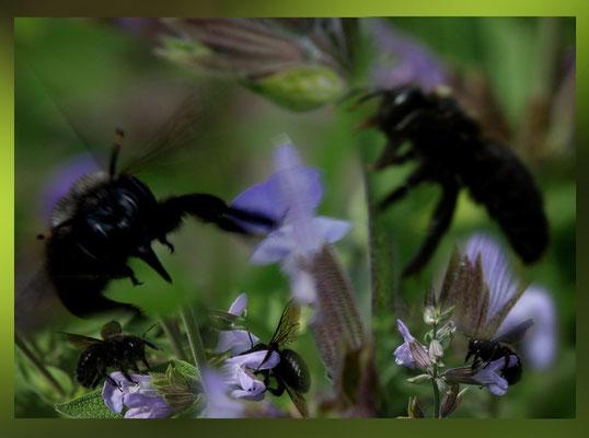 Composite abeille charpentière