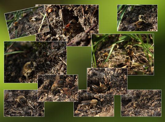 Composite abeilles solitaires