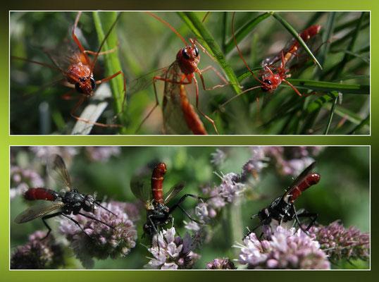 Composite insectes divers 2