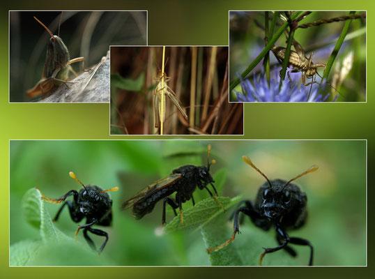 Composite insectes divers 1
