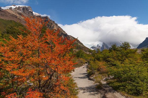 Wanderweg zur Laguna Torre, im Herbst färben sich die Lenga-Büsche rot