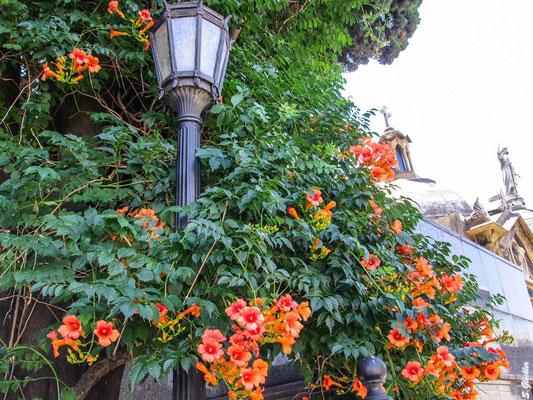 Frühling in Buenos Aires es blüht an jeder Ecke