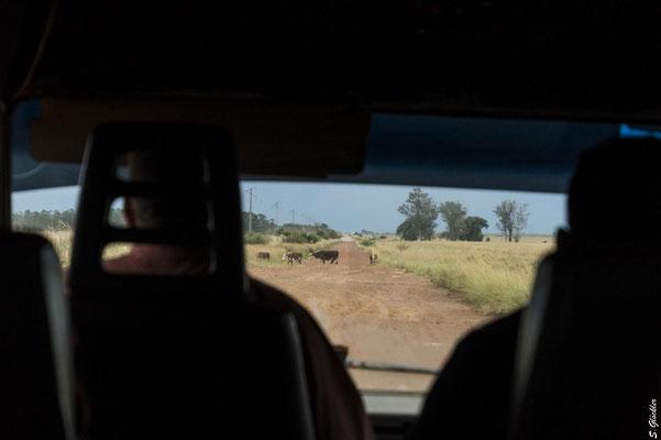 Fahrt von Mercedes nach Carlos Pellegrini