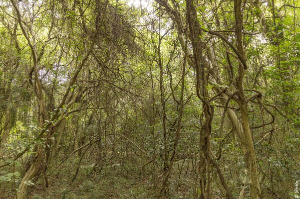 Ein Traum für Naturliebhaber: Carlos Pellegrini, Esteros del Iberá