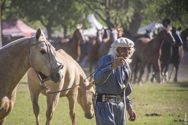 Gaucho, Fiesta de la Tradición in San Antonio de Areco