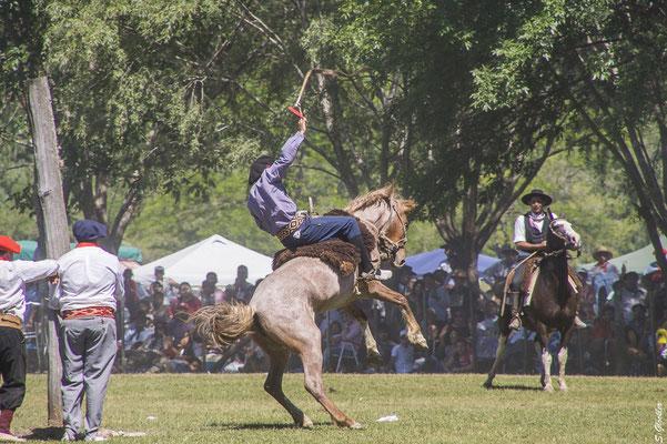 Reitervorführung, Fiesta de la Tradición in San Antonio de Areco