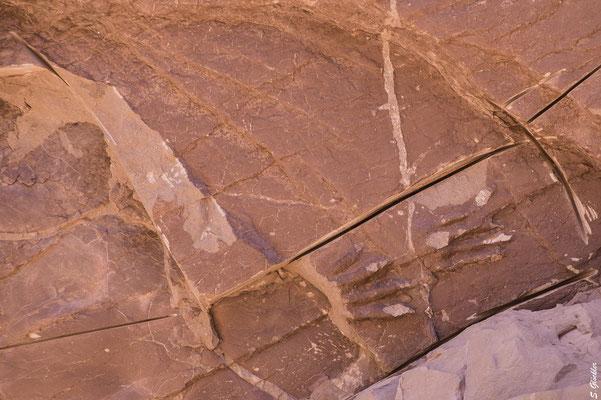 Versteinerungen in der Quebrada de la Troya