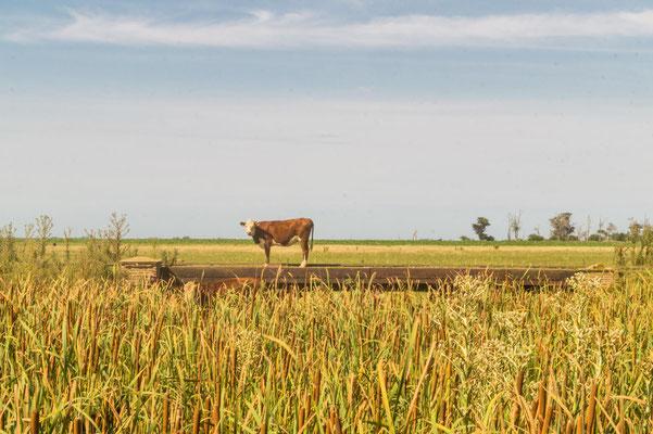 Unterwegs in der Pampa, Santo Domingo, Provinz Buenos Aires