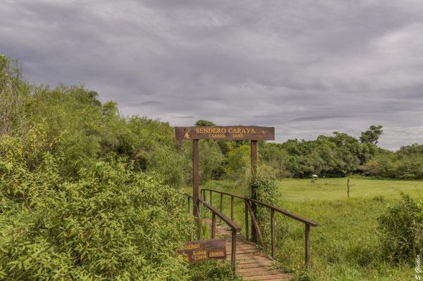 Spaziergang in den Esteros del Iberá