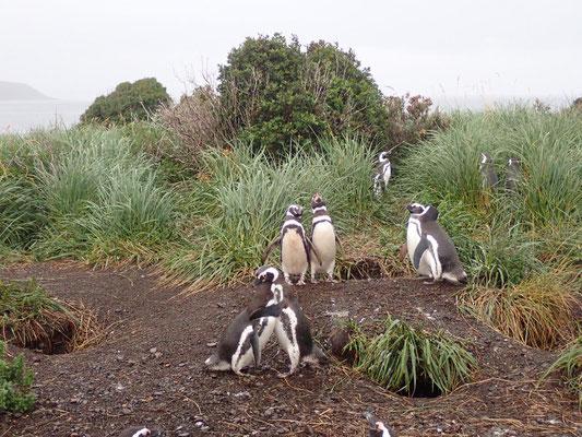Pingu-Umarmung