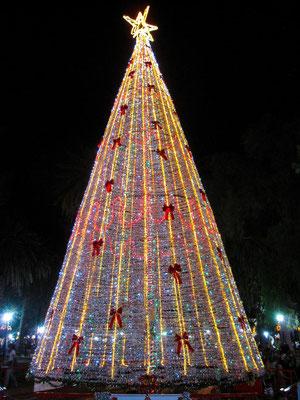 Weihnachtsbaum in Salta