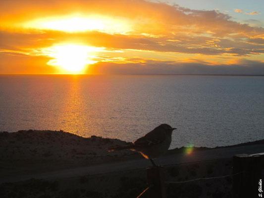 Sonnenuntergang bei Puerto Pirámides