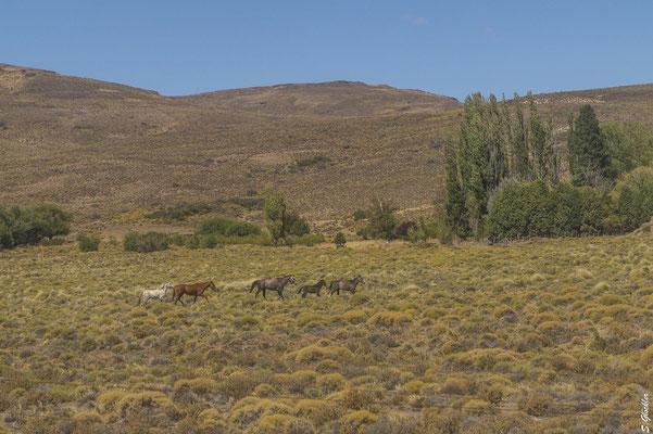 Estancias und kleine Orte unterbrechen die Monotonie der patagonischen Steppe