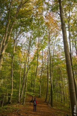 Durch Märchenwälder mit dem Papa