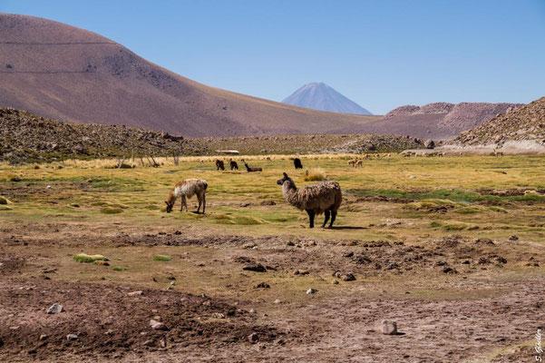 Unterwegs in der Atacama Wüste