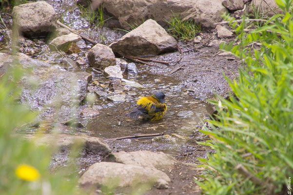 Der Vogel ließ sich von uns nicht bei seinem morgendlichen Bad stören