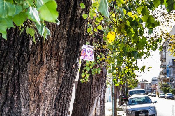 Augen auf bei der Suche nach der Bushaltestelle: Die Busnummern findest du häufig an Bäumen.