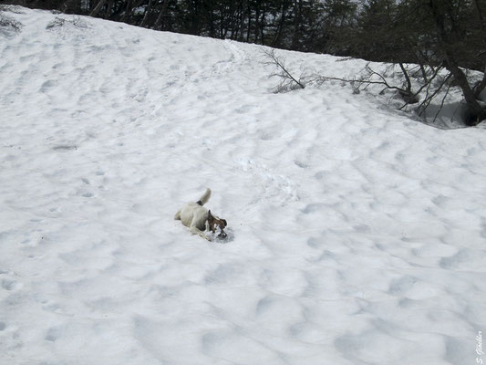 Als erste Schneefelder in Sicht sind, ist Ramón nicht mehr zu bremsen