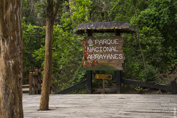 Nationalpark Arrayanes