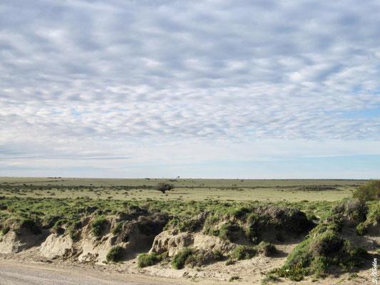das Innere der Halbinsel: trockene Buschsteppe