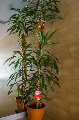 """Weihnachtsbaum"" im Hauseingang"