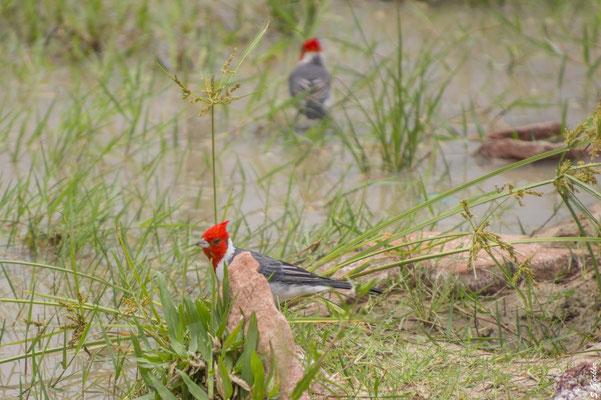 Die Esteros del Iberá sind ein Paradies für Ornitologen