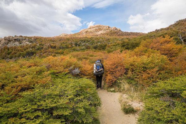 Farbenpracht: Im Frühherbst (März) verfärben sich die Lenga-Büsche