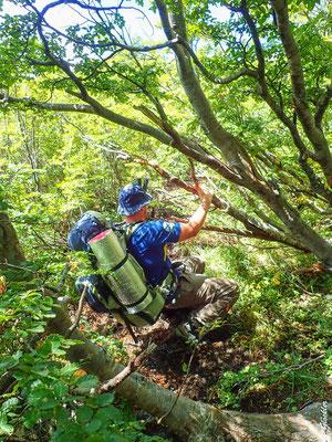 Durch die Lenga-Bäume bahnen wir uns einen Weg nach oben.