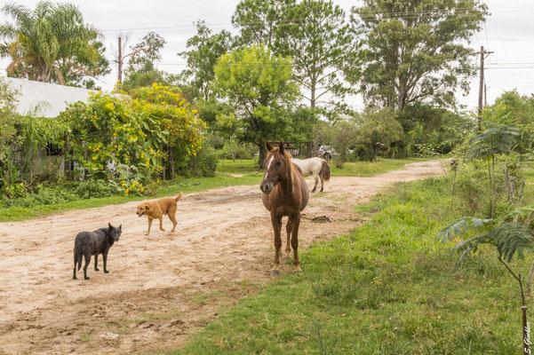 freilaufende Pferde in Carlos Pellegrini