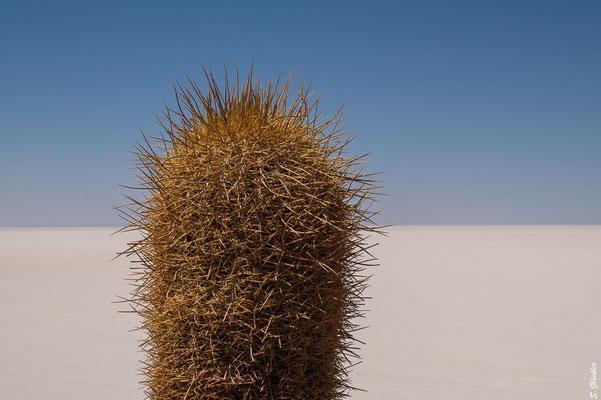 Salzwüste: Salar de Uyuni, Bolivien