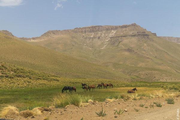 Überall weiden Pferde, Kühe und Ziegen.