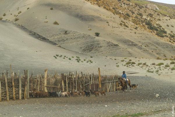 Am Straßenrand sind viele Ranchos zu sehen. Das sind provisorische Hütten und Ställe / Paddocks, wo der Gaucho und seine Tiere Unterschlupf finden.