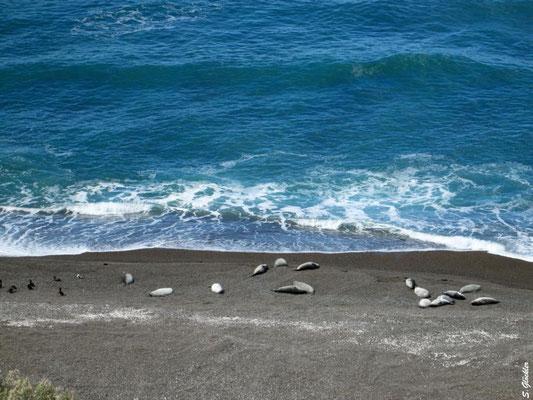 Seehunde beim entspannten Sonnenbaden