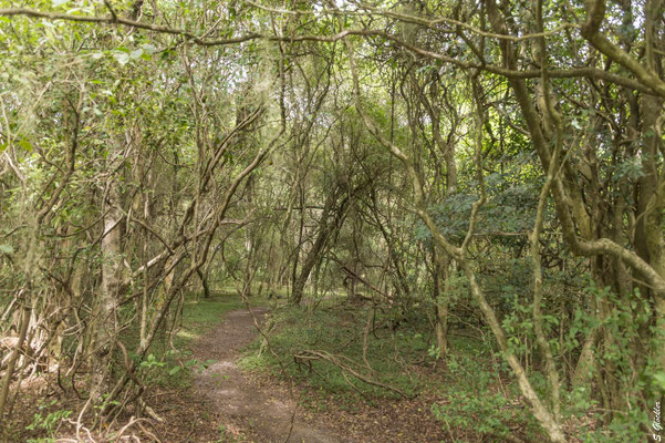 Wanderwege durch den Dschungel