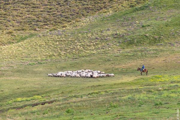 Abends treibt der Gaucho seine Schafe zusammen.