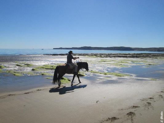 ein Ausritt am Strand in ein unvergessliches Erlebnis