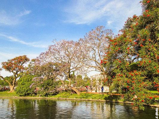 Frühling in Buenos Aires: es blüht an jeder Ecke