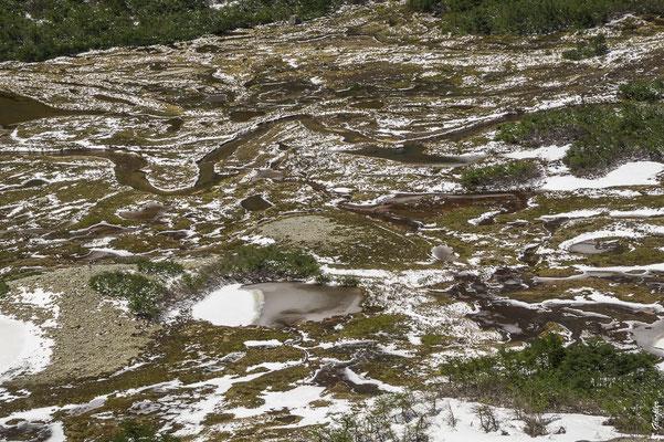 Wandern im Nationalpark Nahuel Huapi: Mallín